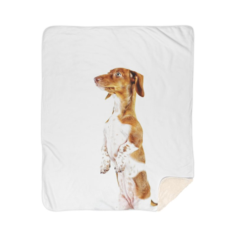 Piebald Dachshund Home Blanket by rufusontheweb's Artist Shop