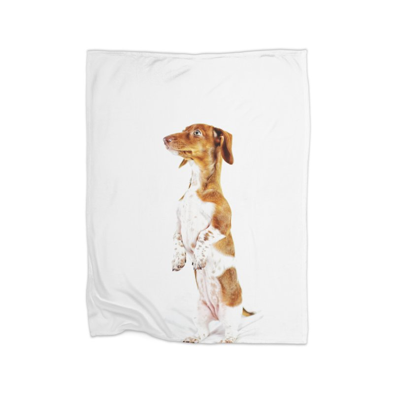 Piebald Dachshund Home Fleece Blanket Blanket by rufusontheweb's Artist Shop