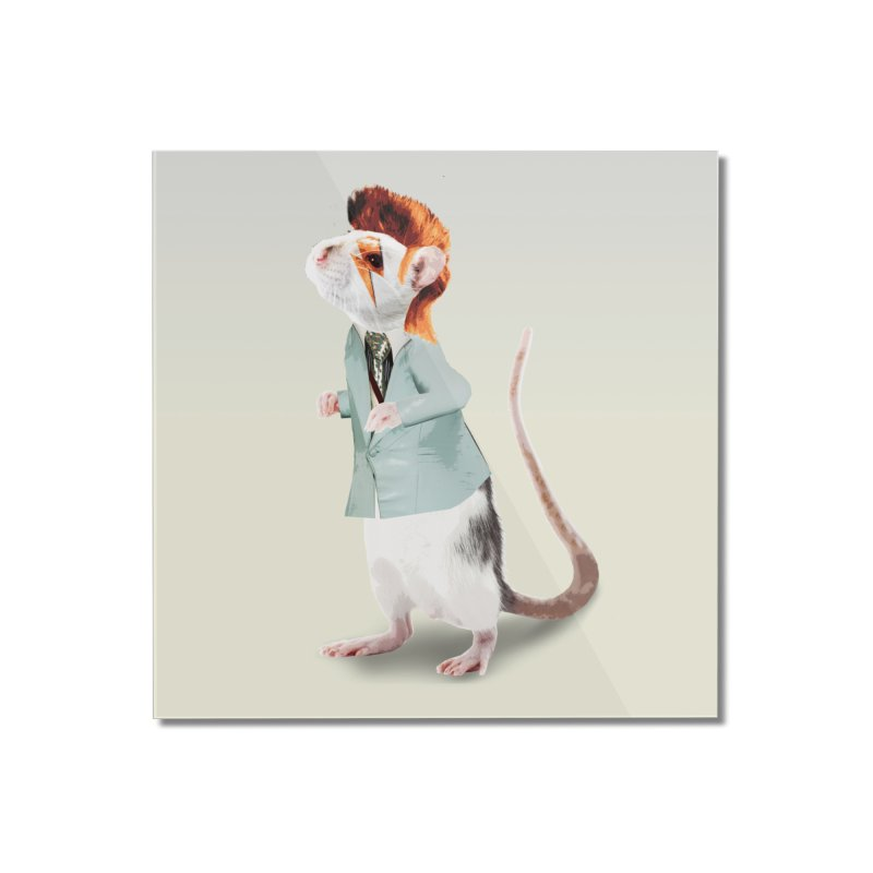 Bowie Rat Home Mounted Acrylic Print by Art of Ryan Winchell