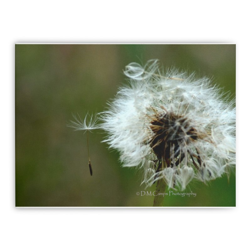 Dandy Lion Seedball Home Stretched Canvas by sacredtreetraditions's Artist Shop