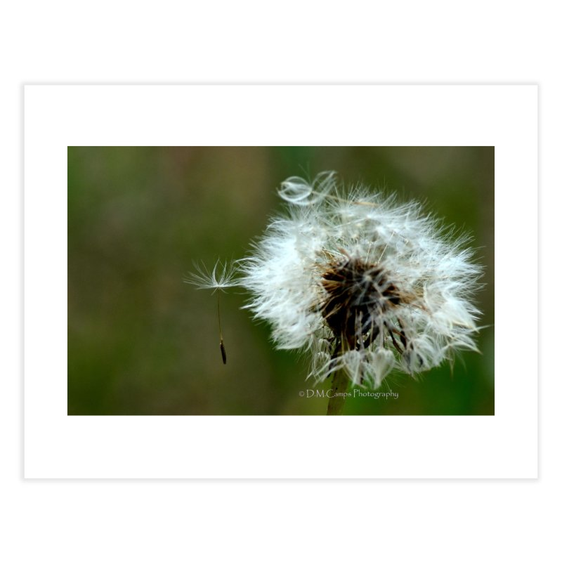 Dandy Lion Seedball Home Fine Art Print by sacredtreetraditions's Artist Shop