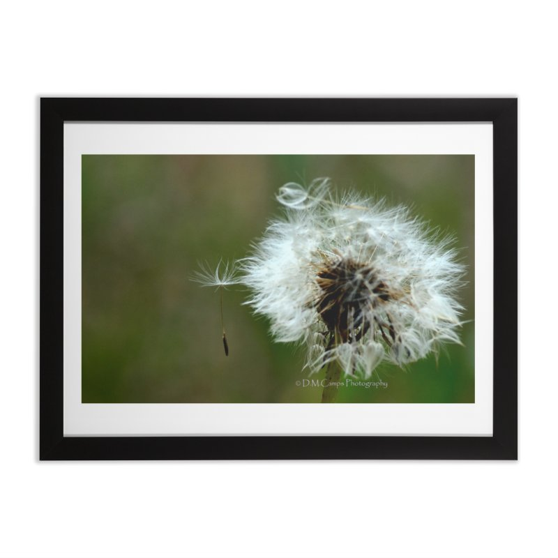 Dandy Lion Seedball Home Framed Fine Art Print by sacredtreetraditions's Artist Shop