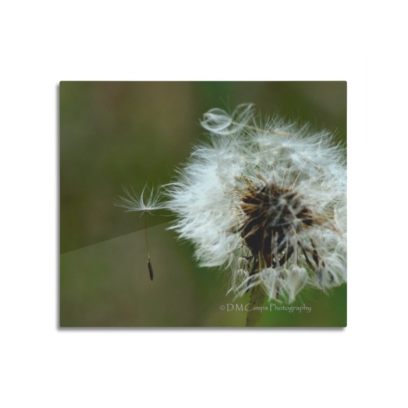 Dandy Lion Seedball Home Mounted Aluminum Print by sacredtreetraditions's Artist Shop