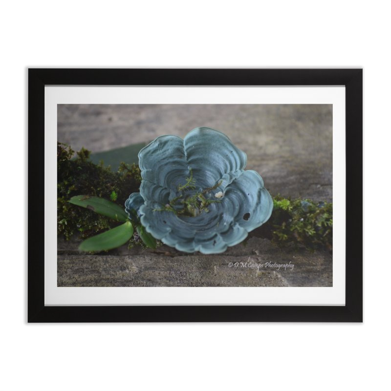 Lichen Home Framed Fine Art Print by sacredtreetraditions's Artist Shop