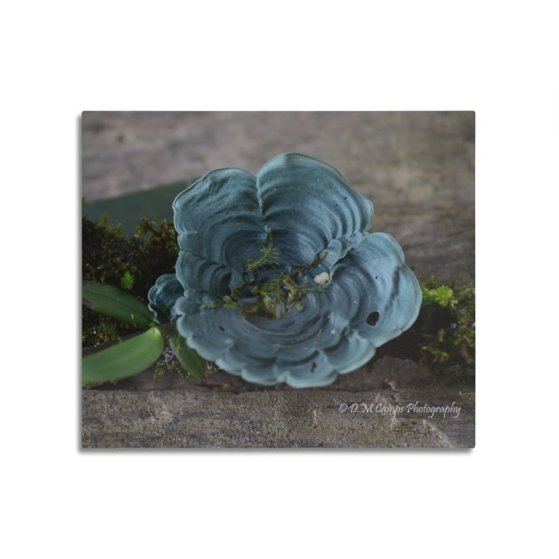 Lichen Home Mounted Acrylic Print by sacredtreetraditions's Artist Shop