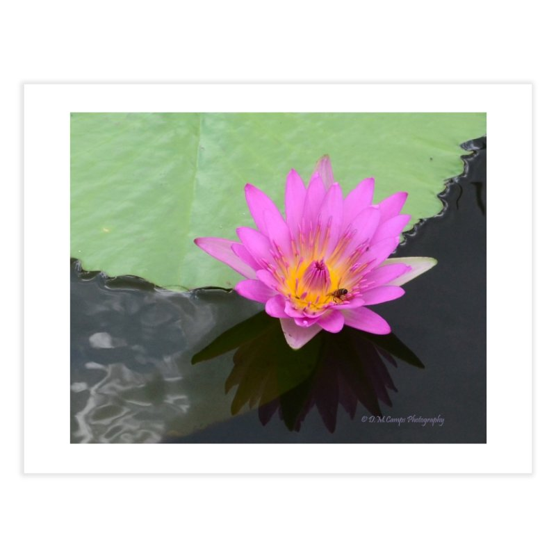 Water Lily Home Fine Art Print by sacredtreetraditions's Artist Shop