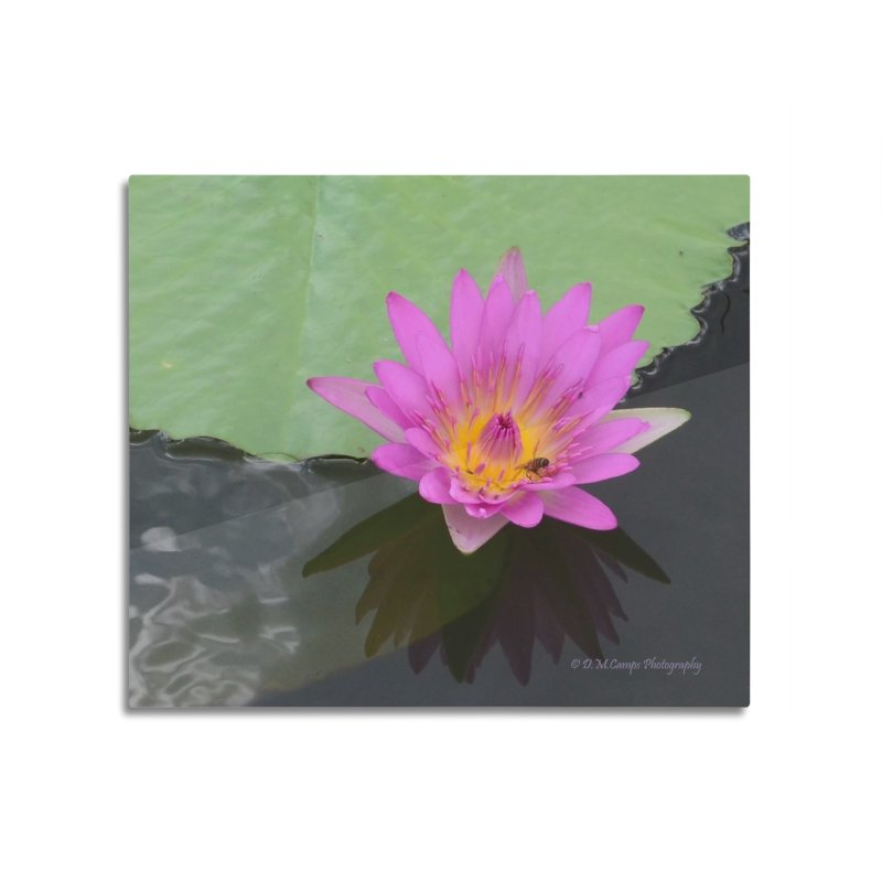 Water Lily Home Mounted Aluminum Print by sacredtreetraditions's Artist Shop