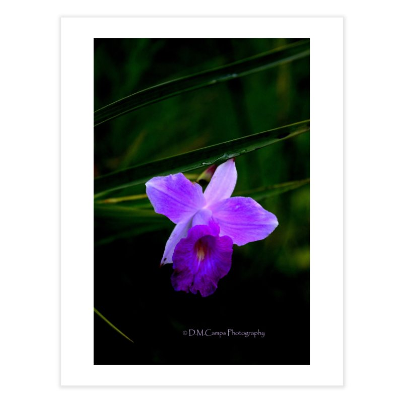 Orchid Home Fine Art Print by sacredtreetraditions's Artist Shop