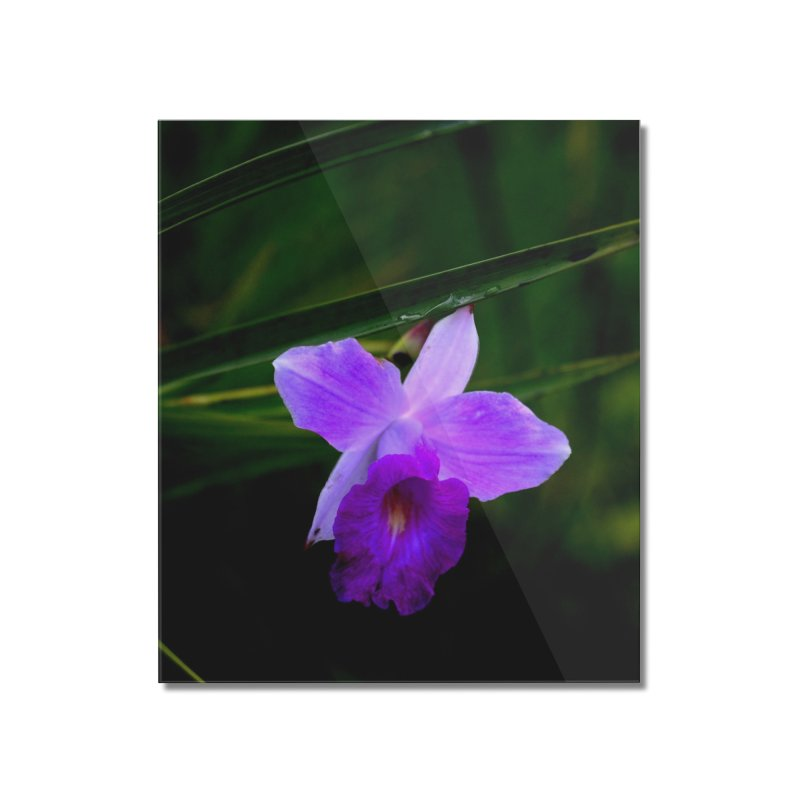 Orchid Home Mounted Acrylic Print by sacredtreetraditions's Artist Shop