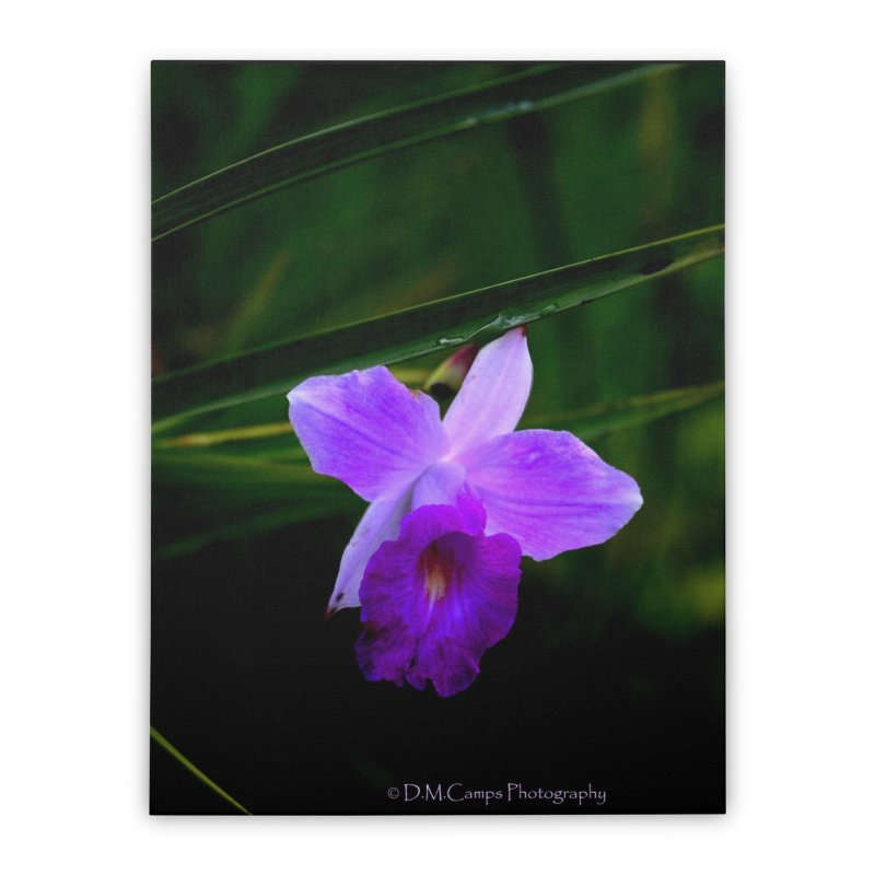 Orchid Home Stretched Canvas by sacredtreetraditions's Artist Shop