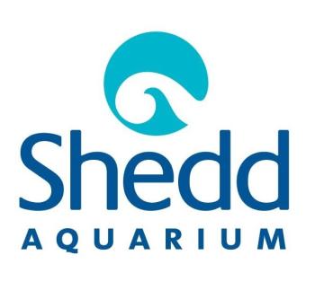 Shedd Aquarium's Artist Shop Logo