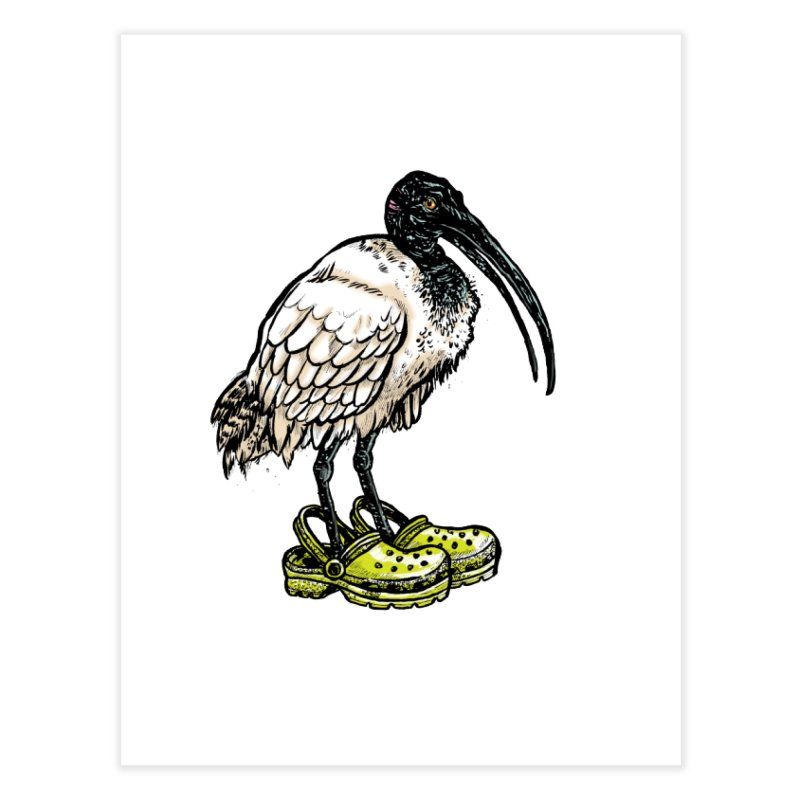 Ibis Home Fine Art Print by Simon Christopher Greiner