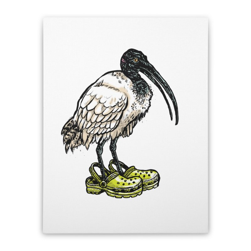 Ibis Home Stretched Canvas by Simon Christopher Greiner