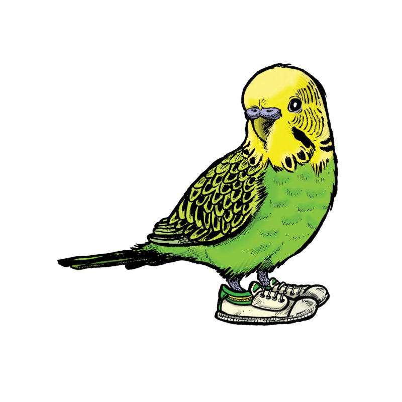 Budgie Women's T-Shirt by Simon Christopher Greiner