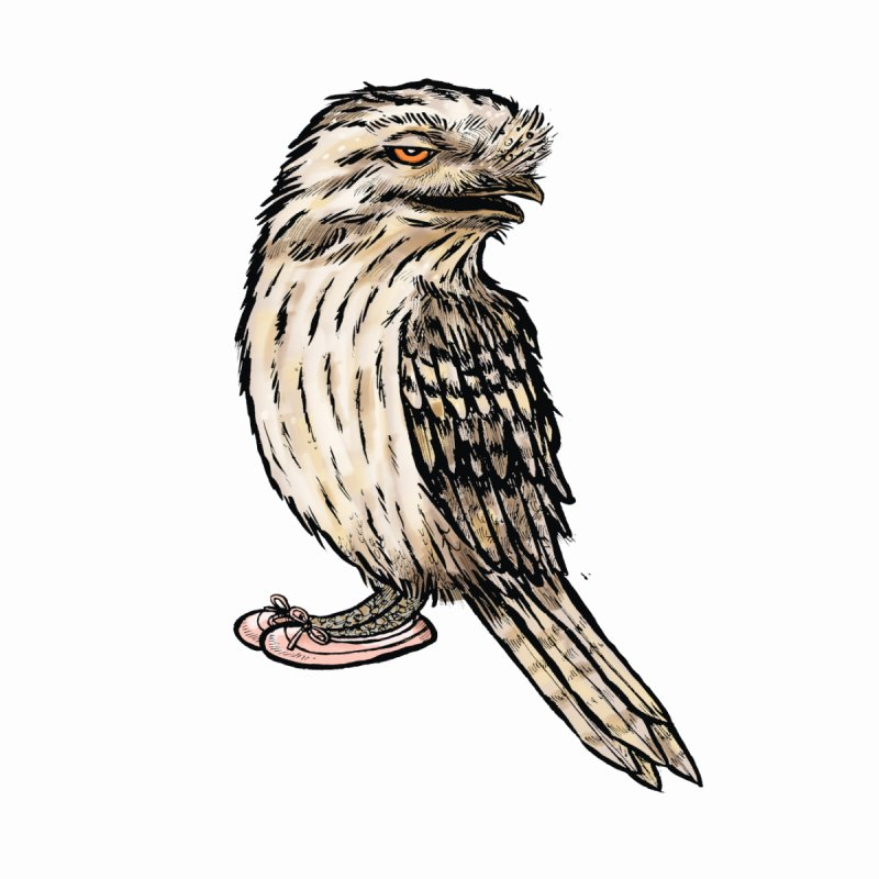 Tawny Frogmouth Women's Tank by Simon Christopher Greiner