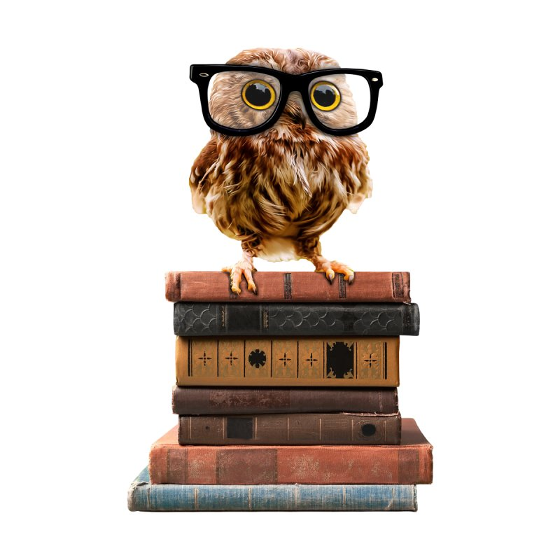 Adorable Nerdy Owl with Glasses on Old Books by Sir Lee Tees