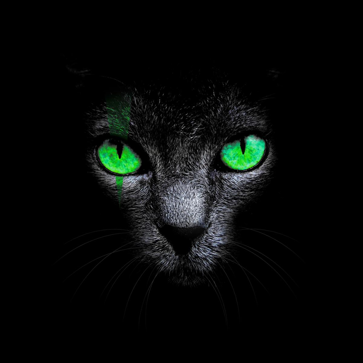 обои картинки черный кот с зелеными свое