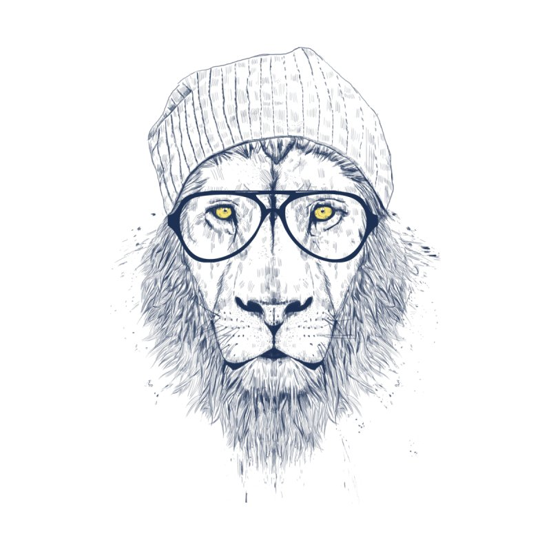Cool Lion None  by Balazs Solti