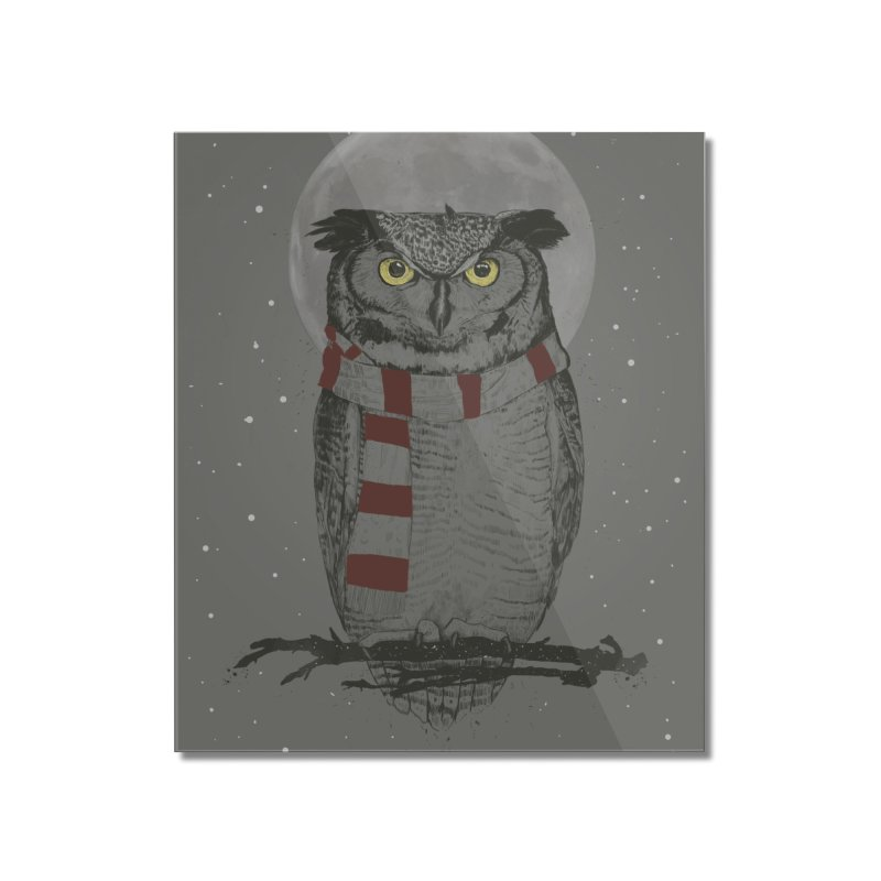 Winter owl Home Mounted Acrylic Print by Balazs Solti