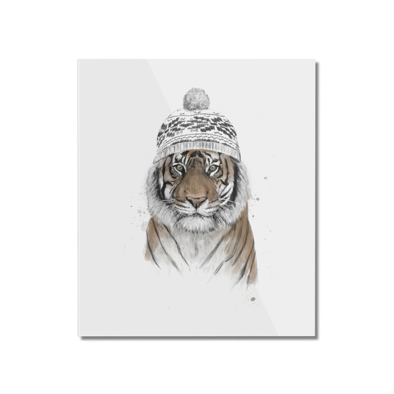 Siberian tiger Home Mounted Acrylic Print by Balazs Solti