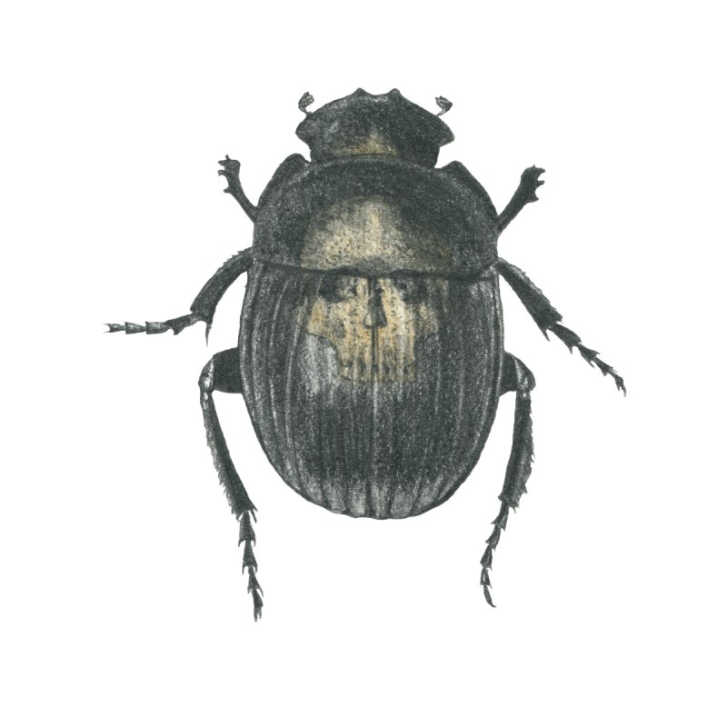 Death Scarab by stephanieinagaki's Artist Shop