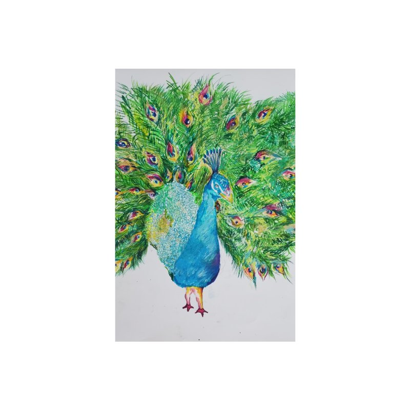Gay Zoo- Peacock original limited edition 1 of 10 print Home Fine Art Print by Steve Khan's Artist Shop