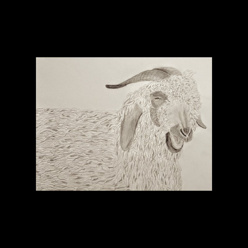 Angora Goat by Whimsical Wildlife Wares