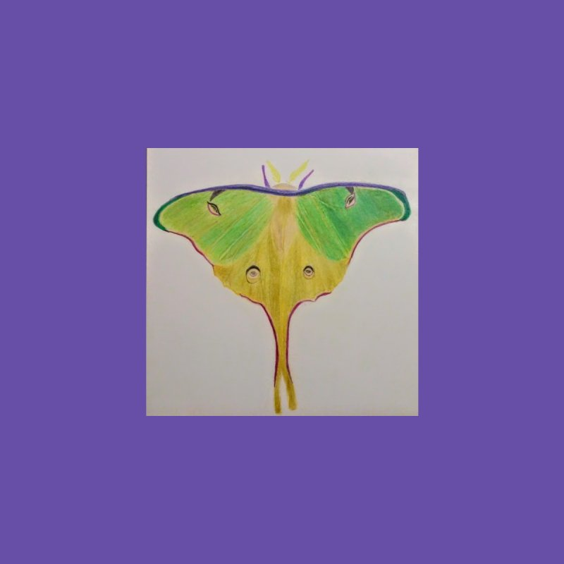 Luna Moth by Whimsical Wildlife Wares