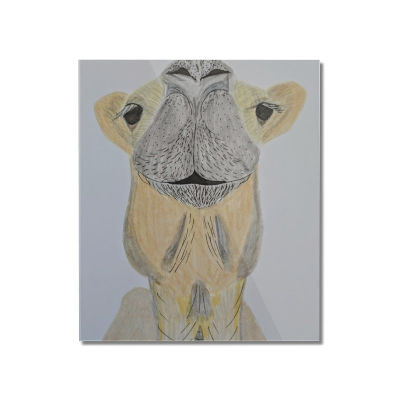 Camel face Home Mounted Acrylic Print by Whimsical Wildlife Wares