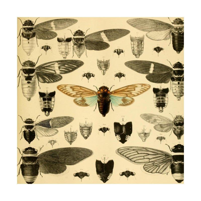 Vintage Cicadas by Suzanne Carter's Artist Shop