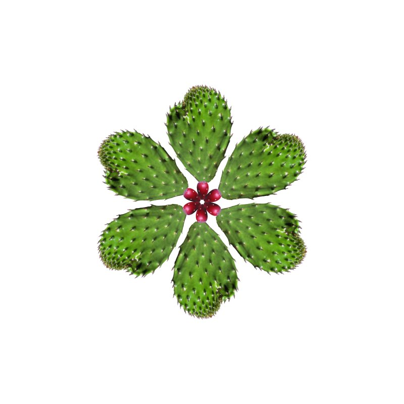 Cactus flower by Tejedor shop