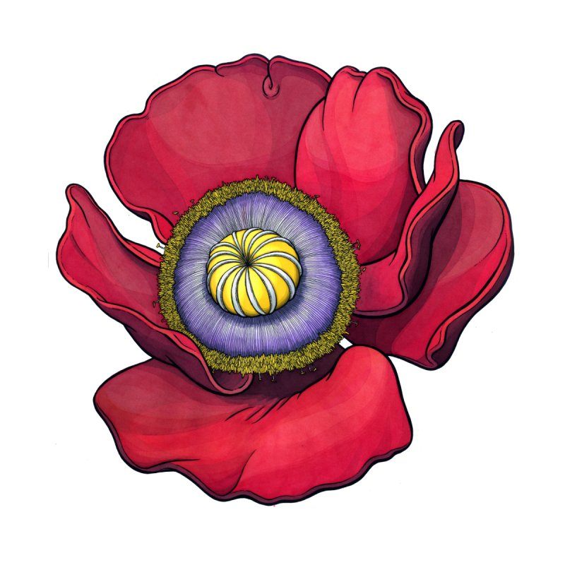 Red Poppy by Scott Teplin's Chazerai Bazaar
