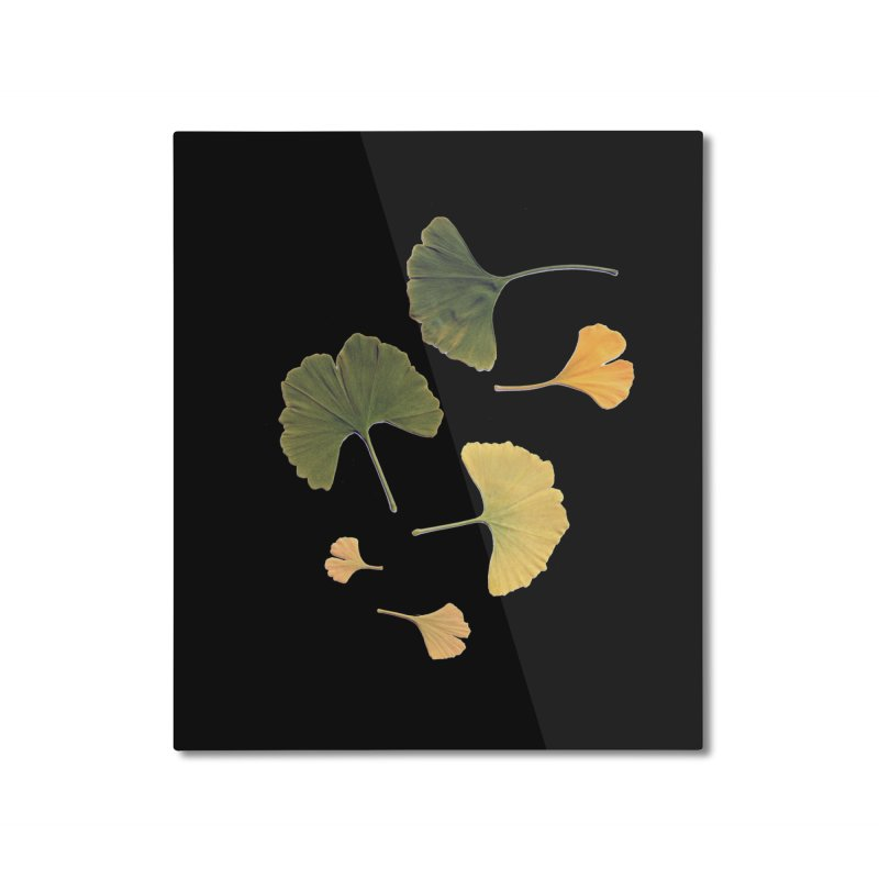 Ginkgo for you. Home Mounted Aluminum Print by terryann's Artist Shop