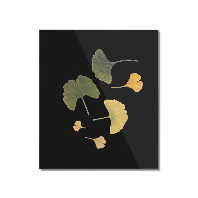 Ginkgo for you. Home Mounted Acrylic Print by terryann's Artist Shop