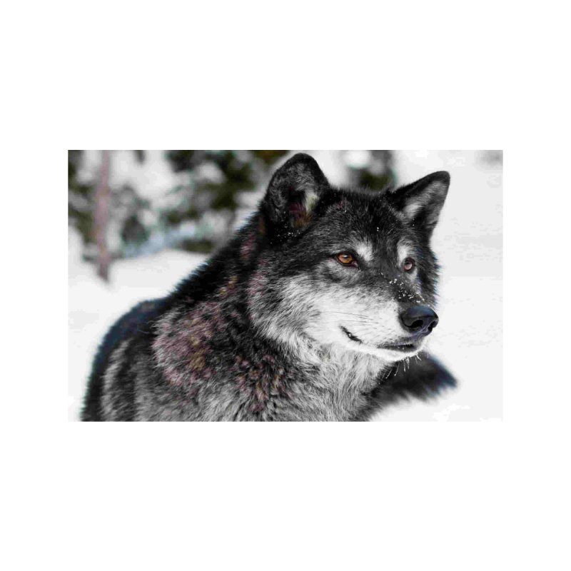 Blackwolf by The Ways of The Old's Artist Shop
