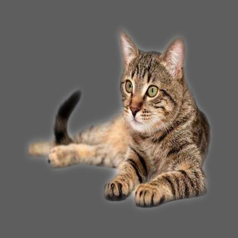 Cat Women's Longsleeve T-Shirt by Threadless Artist Shop