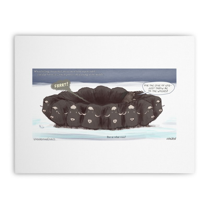 A Muskox Circle Home Stretched Canvas by The Underdone Comics Shop