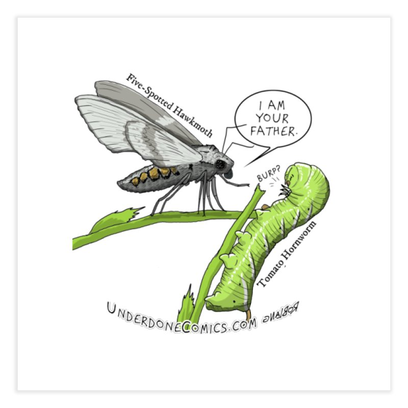 Tomato Hornworm & Hawkmoth: Father & Child Home Fine Art Print by The Underdone Comics Shop
