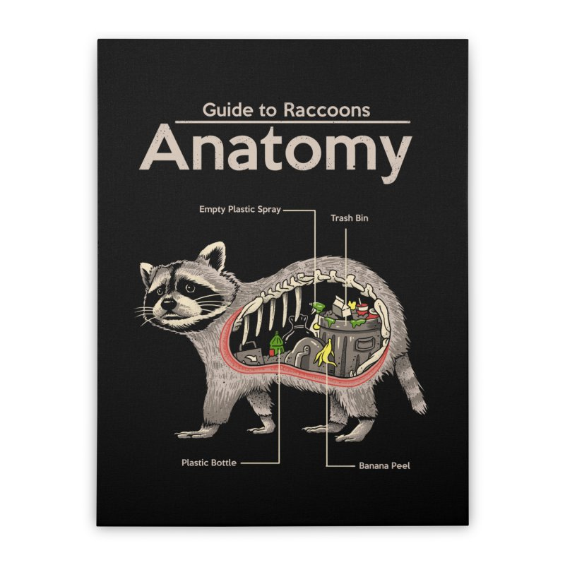Anatomy of a Raccoon Home Stretched Canvas by Vincent Trinidad Art