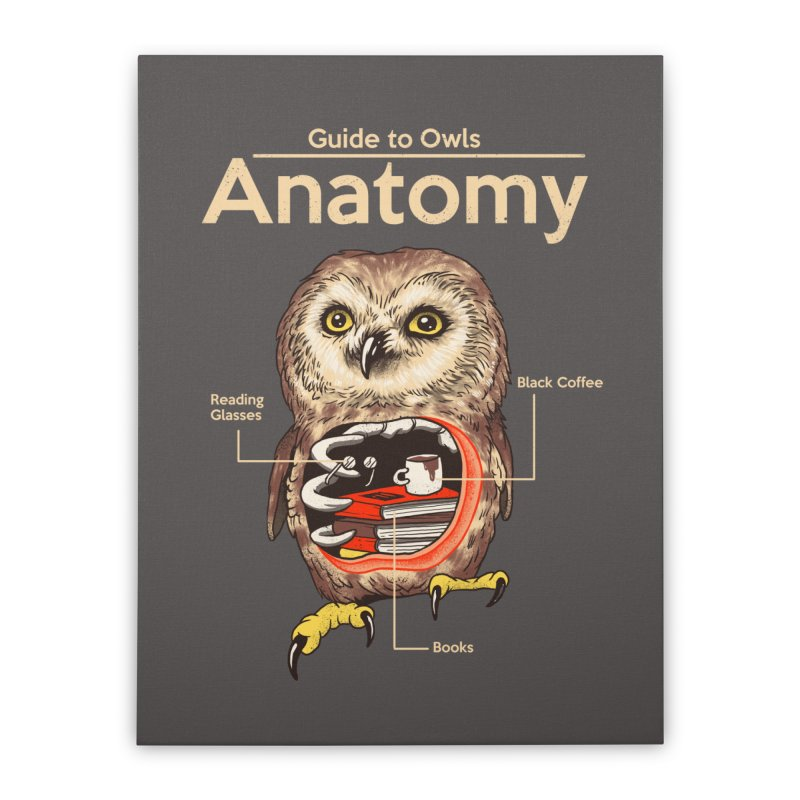 Anatomy of Owls Home Stretched Canvas by Vincent Trinidad Art