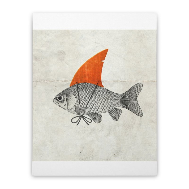 Shark Fin Goldfish Home Stretched Canvas by Vin Zzep's Artist Shop