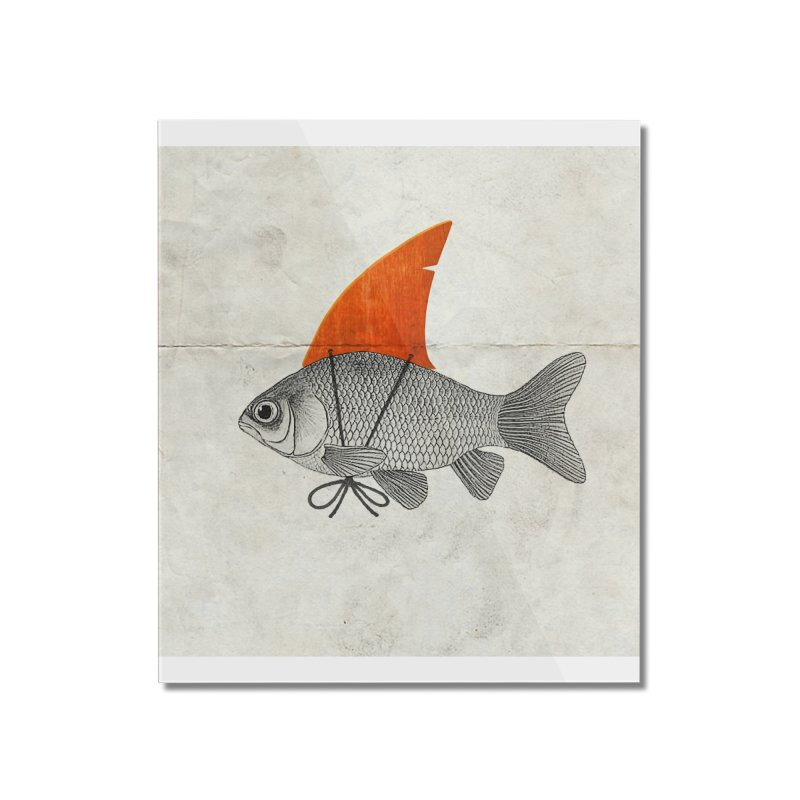 Shark Fin Goldfish Home Mounted Acrylic Print by Vin Zzep's Artist Shop