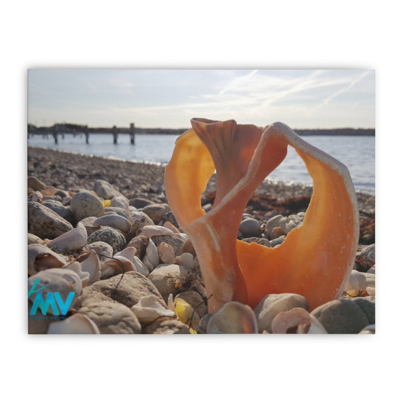 A Shell's Life Home Stretched Canvas by visitmv's Shop