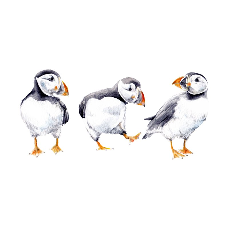 Watercolor Puffins by Wandering Laur's Artist Shop