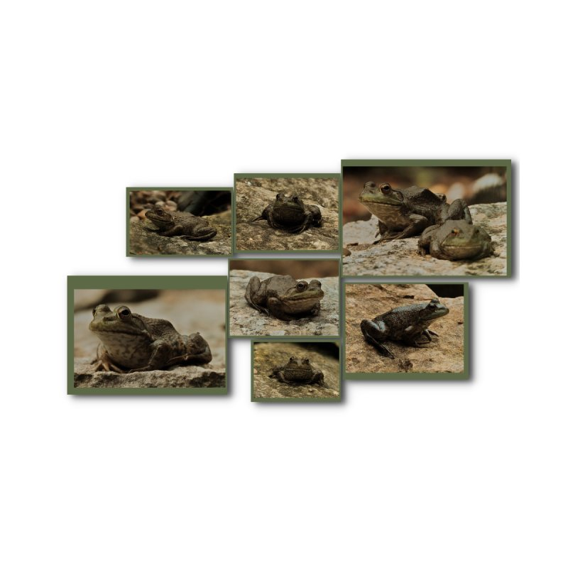 Ribbit, who likes Frogs?   by #woctxphotog's Artist Shop