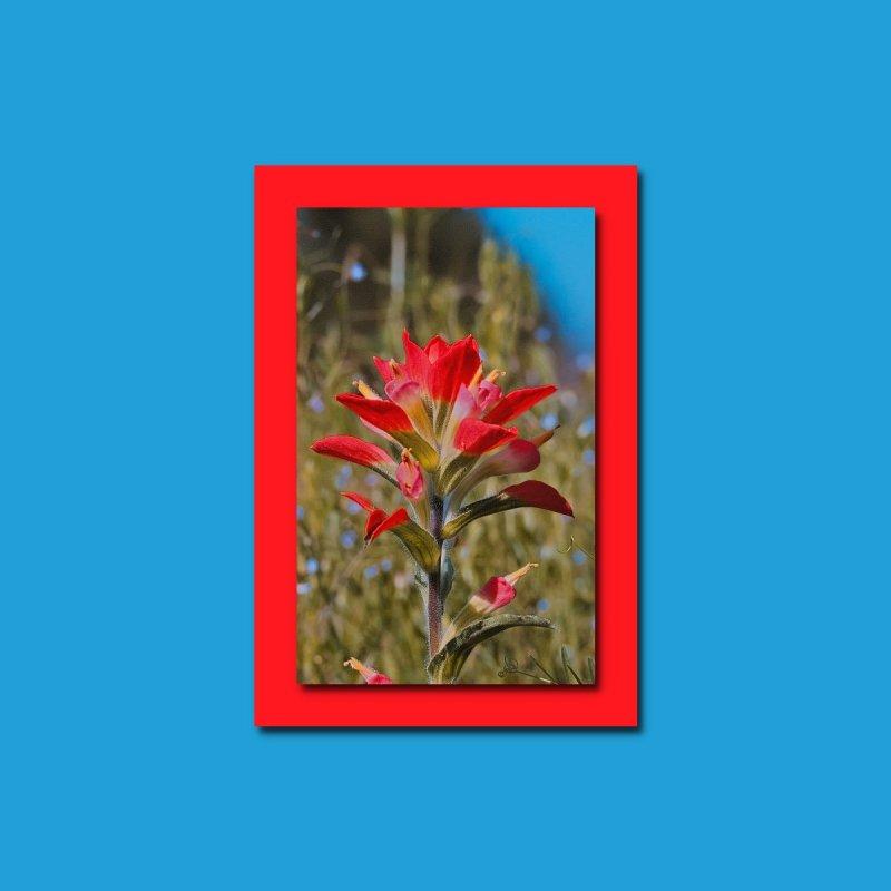 Indian paintbrush, it is my favorite flower   by #woctxphotog's Artist Shop