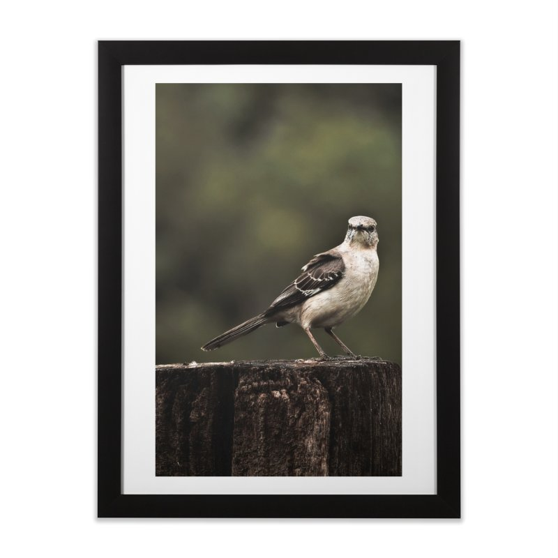 Are You Looking At Me? Home Framed Fine Art Print by #woctxphotog's Artist Shop