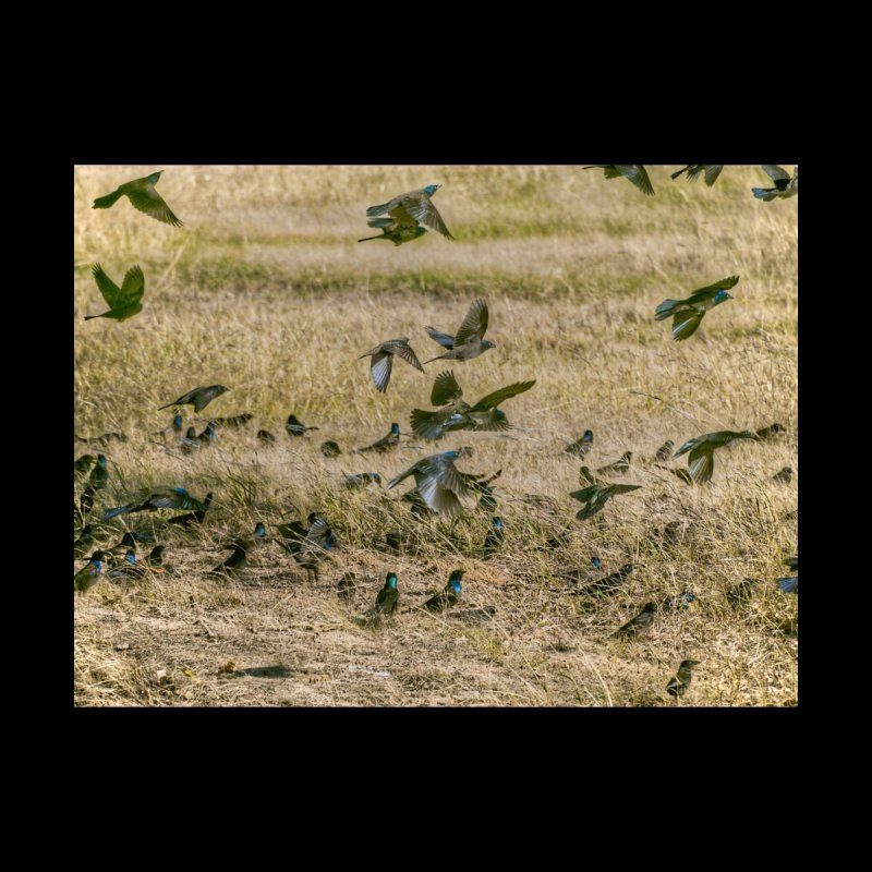 Field Of Birds by #woctxphotog's Artist Shop