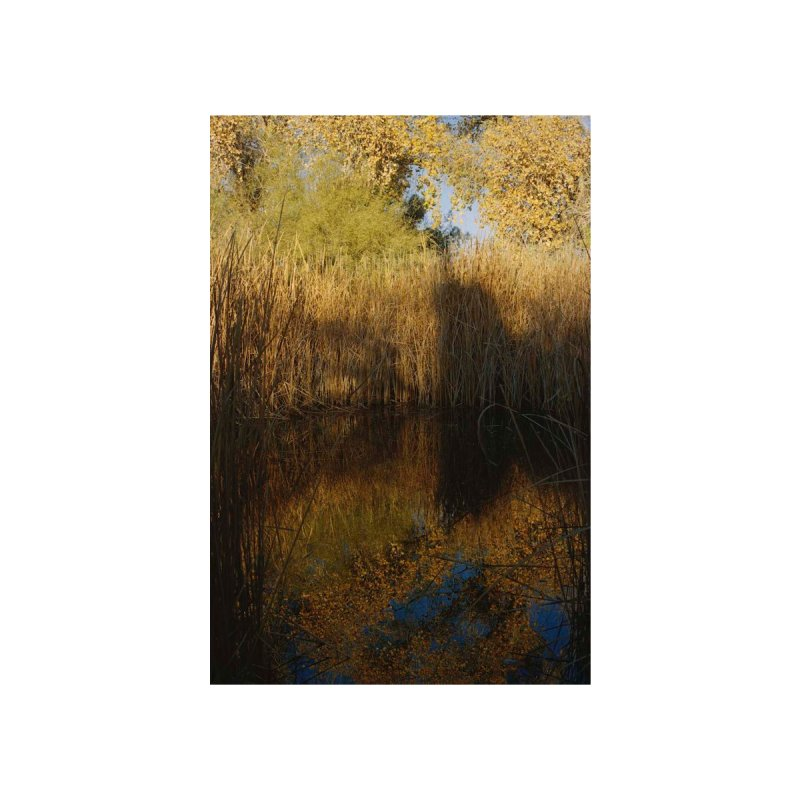 Yellow Reflections Home Tapestry by zoegleitsman's Artist Shop