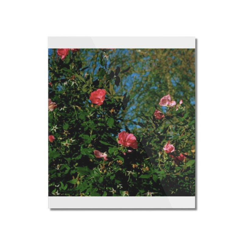 Flowers Home Mounted Acrylic Print by zoegleitsman's Artist Shop